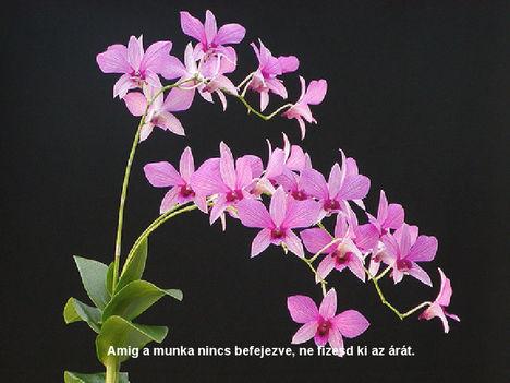 Orhidea és felvillanó gondolatok 33