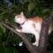 2008.08.10.A cica is jól van