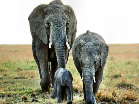 elefant045