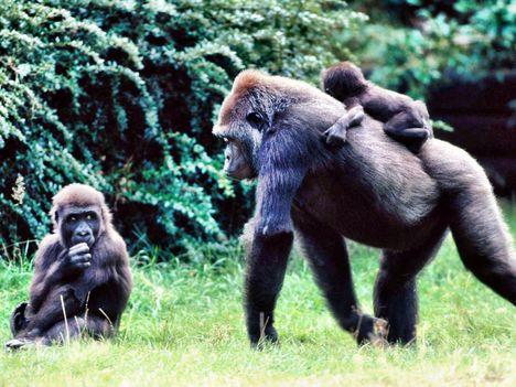 primate_1013