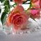 rózsák 8