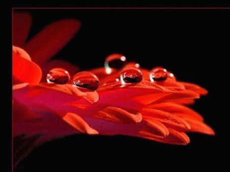 esőcseppes virágok 29