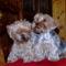 Lola és Joy