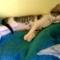 Alvó cica 1.