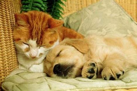 Békés alvás
