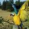 Papagájok (8)
