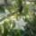Rosta Marika erkély-növényei