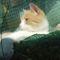 Vili cica