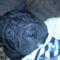 Chowder aludni keszul