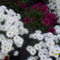 Virágok...