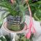 Bromelia1