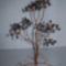 szavannai fa 1