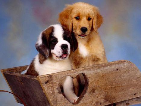 két szép kis kutya