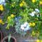 olomvirág,sárga sétány és a többi
