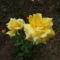 A páros sárga