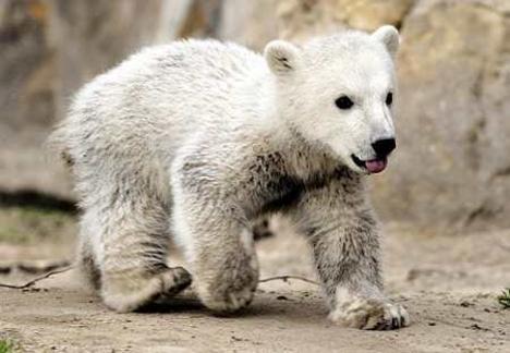 Medvék (38)