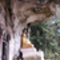 Pak Ou - Boldog buddha 2