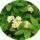 Sárvári Gyuláné  -  Virágaim, kaktuszaim