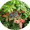 Virágaim, kaktuszaim.---Hajni 5