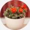 Virágaim, kaktuszaim.---Hajni 6