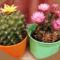 Virágaim, kaktuszaim.---Hajni 7