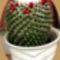 Virágaim, kaktuszaim.---Hajni 8