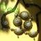zöld margaréták