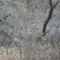 Dunakeszi tőzegláp 10