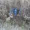 Dunakeszi tőzegláp 19