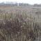 Dunakeszi tőzegláp 20