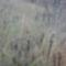 Dunakeszi tőzegláp 23