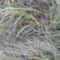 Dunakeszi tőzegláp 26