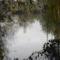 Dunakeszi tőzegláp 27