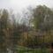 Dunakeszi tőzegláp 2