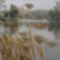 Dunakeszi tőzegláp 8