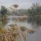 Dunakeszi tőzegláp 9
