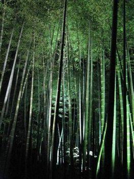 Bambusz-dzsungel