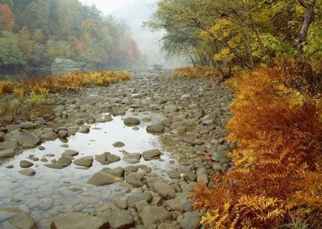 Erdei patak őszi, csapadékszegény időben