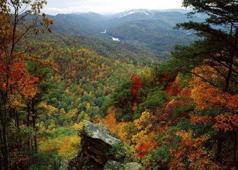Lombhullató erdő őszi ruhában