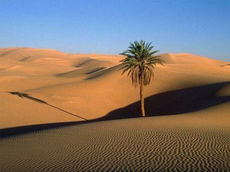 Végtelen Szahara, Földünk legnagyobb sivataga