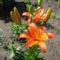 1141940971_virágok 001