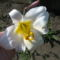 1590492103_virágok 003