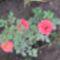 virágok 002