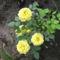 virágok 003