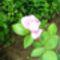virágok 007