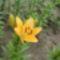 virágok 008