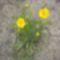 virágok 009