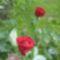 virágok 012