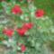 virágok 013