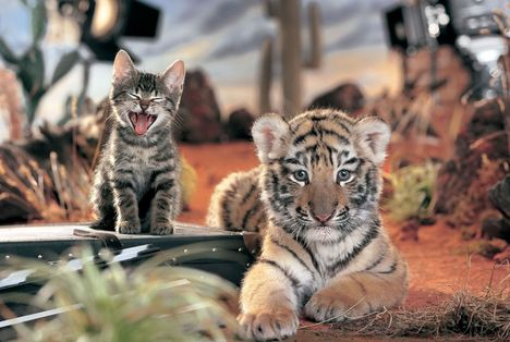 1726_whiskas-tigris-es-cica